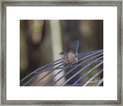 Two Birds On Wire Framed Print