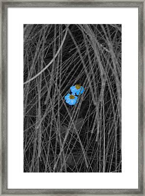 Two Blue Framed Print by Douglas Barnard