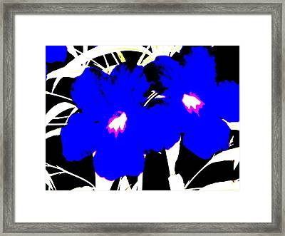 Two Blue Jack Flowers Framed Print by David Clark
