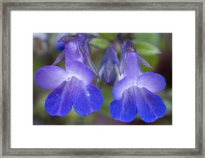 Framed Print featuring the photograph Two Blue by Sonya Lang