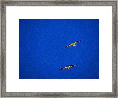 Framed Print featuring the photograph Two Blue by Tom DiFrancesca