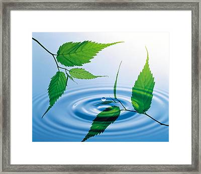 Two Branches With Green Leaves Floating Framed Print