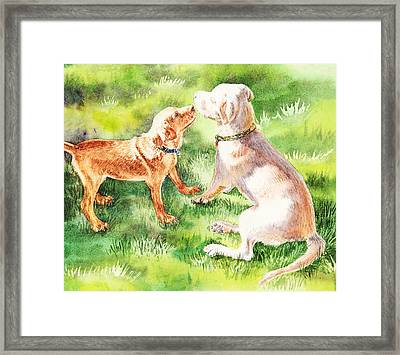 Two Brothers Labradors Framed Print
