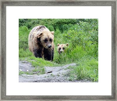 Two Brown Bears Framed Print