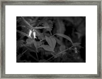 Two Buds Framed Print