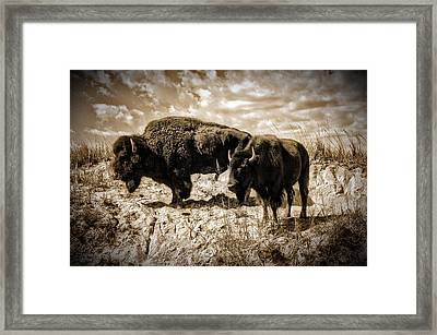 Two Buffalo Framed Print