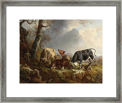 Two Bulls Defend Against A Cow Attacked By Wolves Framed Print