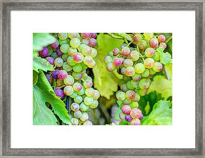Two Bunches Framed Print
