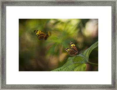 Two Butterflies Framed Print by Bradley R Youngberg