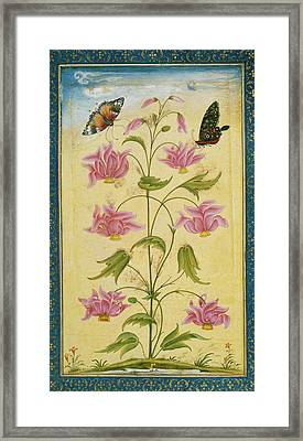 Two Butterflies On A Plant Framed Print by British Library