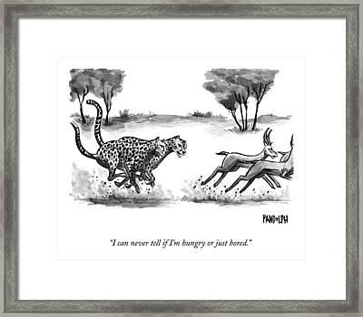 Two Cheetahs Chase Antelopes Framed Print