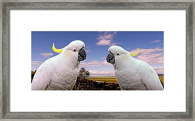 Two Cockatoos Framed Print