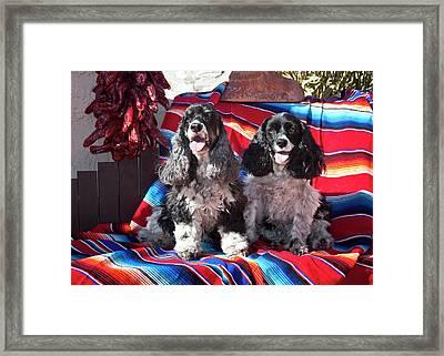Two Cocker Spaniels Sitting Framed Print by Zandria Muench Beraldo