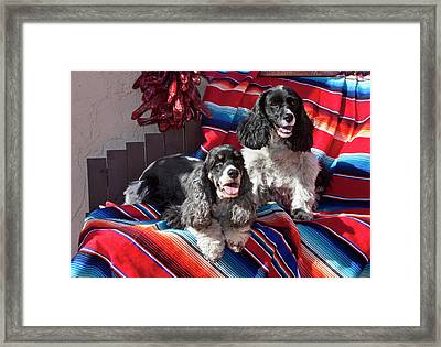 Two Cocker Spaniels Together Framed Print