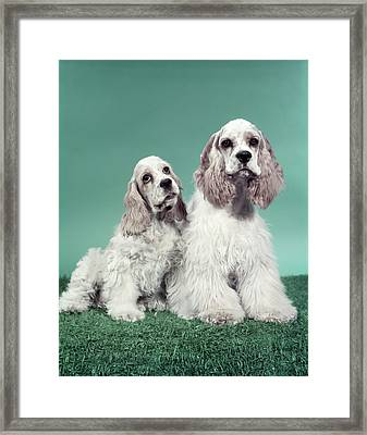 Two Cocker Spaniels Framed Print