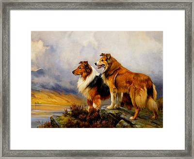 Two Collies Above A Lake Dr Framed Print by Wright Barker
