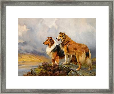 Two Collies Above A Lake Framed Print by Wright Barker