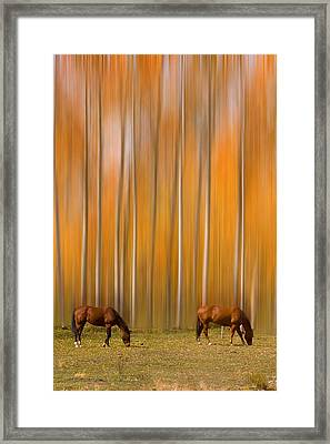Two Colorado High Country Mystic Autumn Horses Framed Print
