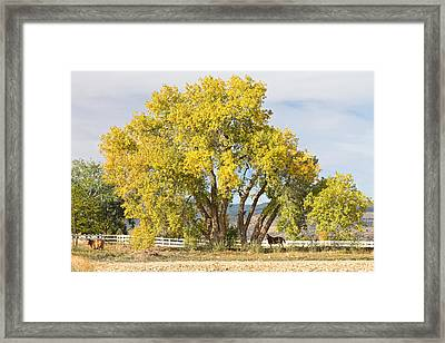 Two Country Horses Autumn View Framed Print