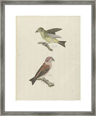 Two Crossbills, Possibly Christiaan Sepp Framed Print by Quint Lox