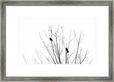 Two Crows Framed Print by Marilyn Hunt