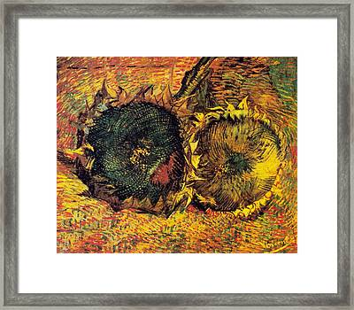 Two Cut Sunflowers Framed Print