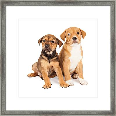 Two Cute Crossbreed Puppies Framed Print by Susan Schmitz