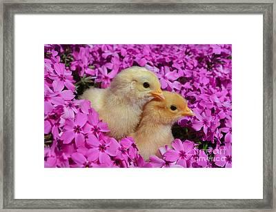 Two Cute Framed Print by Kassia Ott
