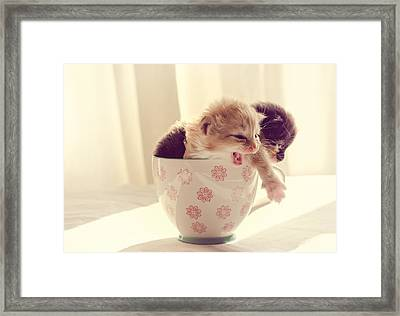 Two Cute Kittens In A Cup Framed Print