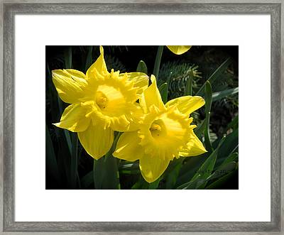 Two Daffodils Framed Print by Kathy Barney