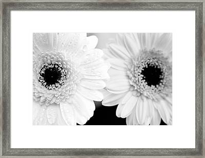 Two Daisy Flowers Framed Print