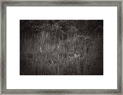 Two Deer Hiding Framed Print by Bradley R Youngberg