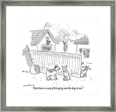 Two Dogs Are Speaking With A Cat Walking Near By Framed Print