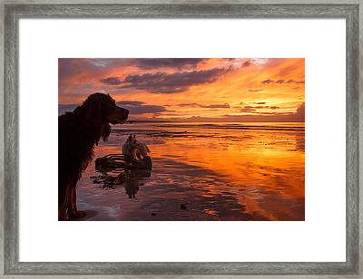 Two Dogs Look Out To Sea During An Amazing Beach Sunset. Framed Print