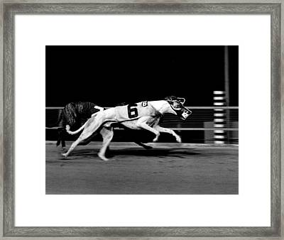 Two Dogs Running Tight Framed Print by Retro Images Archive
