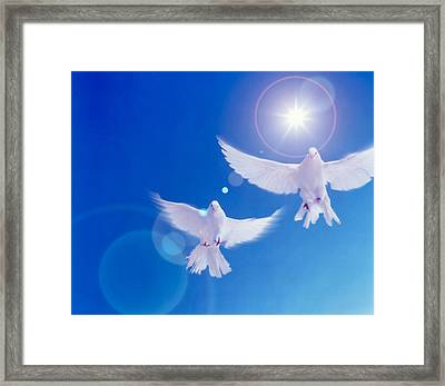 Two Doves Side By Side With Wings Framed Print