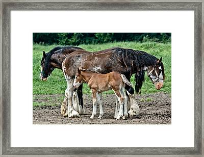 Two Drafts And A Half Framed Print by Cheryl Baxter
