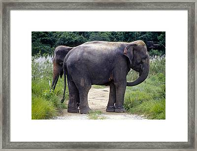Two Elephants Framed Print