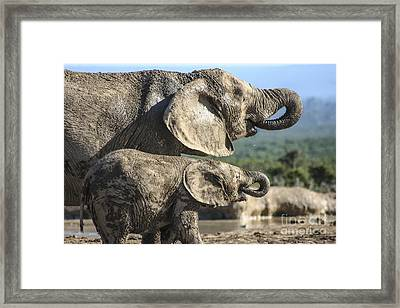 Two Ellies Drinking Framed Print