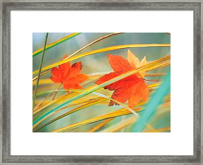 Two Fall Orange Fall Leaves Amid Yellow Framed Print by Panoramic Images