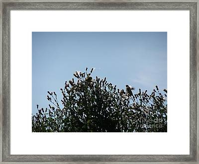 Two Feeding Framed Print by Deborah DeLaBarre