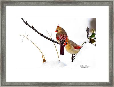 Two Females Posing As Cardinals Framed Print by Randall Branham