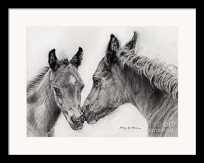 Foal Drawings Framed Prints