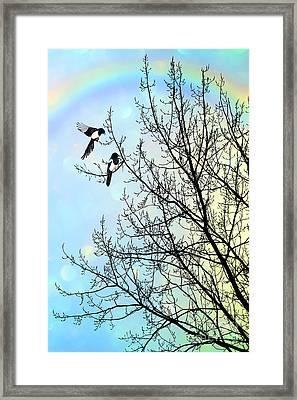 Two For Joy Framed Print by John Edwards