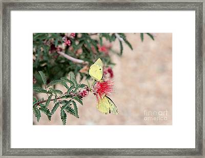 Two For Tea And Nectar Framed Print