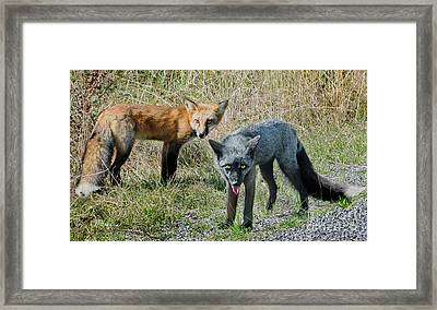 Two Fox Seattle Framed Print