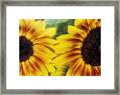Two Freshness Framed Print by Stelios Kleanthous