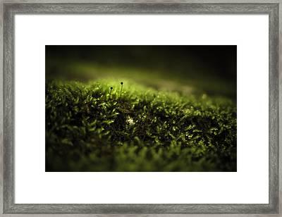Two-gather Framed Print by Shane Holsclaw