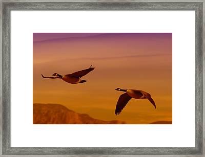 Two Geese In Flight Framed Print by Jeff Swan