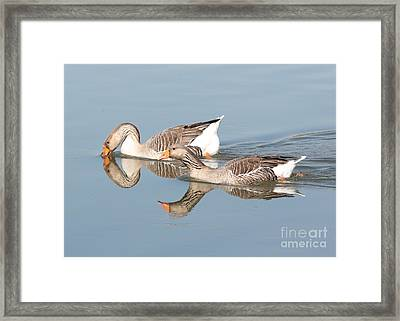 Two Geese Reflecting On Water Framed Print